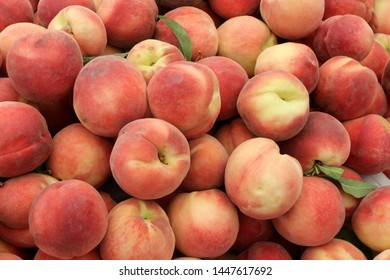 White Peach, Prunus persica, fruit tree with red and white fuzzy fruits with soft white flesh, sweeter and with little acidic tang.