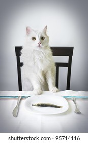 White pedigree cat standing proud over white plate with fish in it.