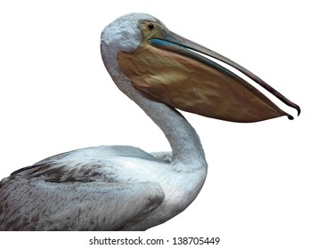 White pelican standing proud isolated over white background