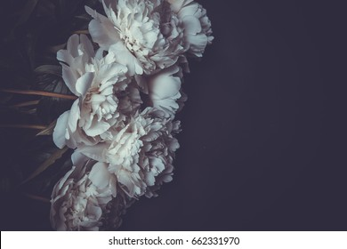 white peonies on black background. tinted frame