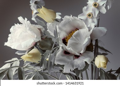white peonies and spring flowers, a bouquet on a gray background.