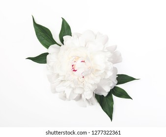White peony flower and leaves on white background. Top view. Flat lay.