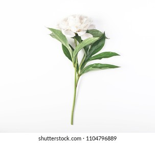 White peony flower on white background. Top view. Flat lay.