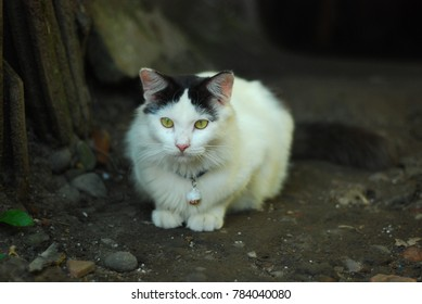a white persian cat is idle on the ground