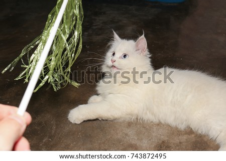 White Persian Cat Interesting Green Plastic Stock Photo Edit Now
