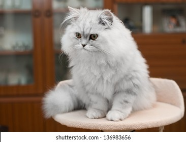 white persian cat on bed  with copy space