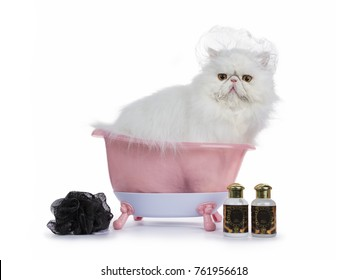 White Persian cat wearing shower cap in pink bat tub with sponge and shamppo bottles isolated on white