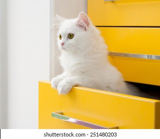 White persian kitten peeks out of the yellow drawer cabinet