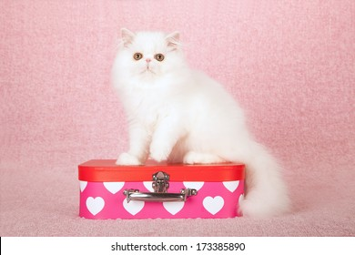 White Persian kitten sitting on top of pink small toy suitcase box against pink background