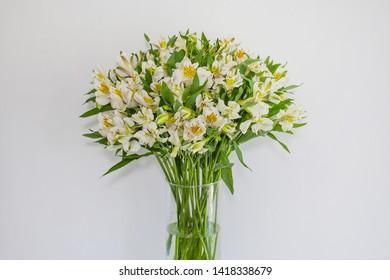 White Peruvian lilies (Astroemeria) on white background