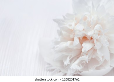 White petals of flowers closeup. Gentle natural background. Flower pattern. Selective focus.