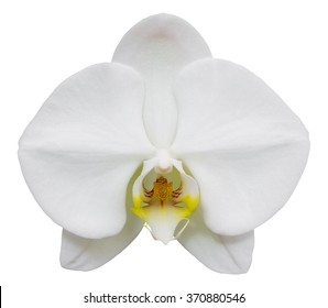 white phalaenopsis orchid flower isolated on white with clipping path