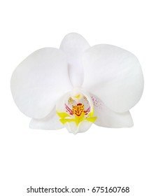 white phalaenopsis,white orchid on white background