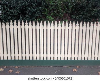 white picket fence with green hedge growing behind