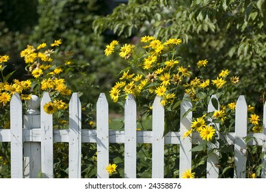 White picket fence with yellow flowers.