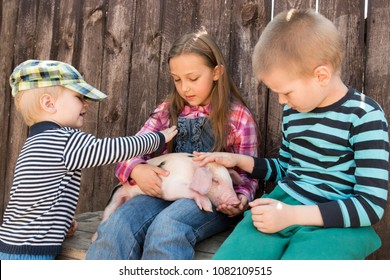 White pig with black spots of breed pietren sits on hand's farmer's daughter. Children play with newborn piglet in farmyard. Preschoolers love to spend vacations in countryside. Selective focus
