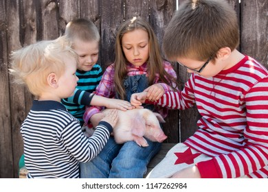 White pig with black spots of breed pietren sits on hand's farmer's daughter. Children play with newborn piglet in farmyard yard. Preschoolers love to spend vacations in countryside. Shallow focus