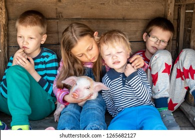 White pig with black spots of breed pietren sits on hand's farmer's daughter. Children play with newborn piglet in farmyard yard. Preschoolers love to spend vacations in countryside. Selective focus