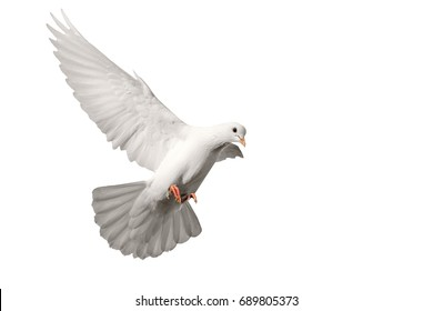 White pigeon flying isolated on white , bird of peace, religious symbolism