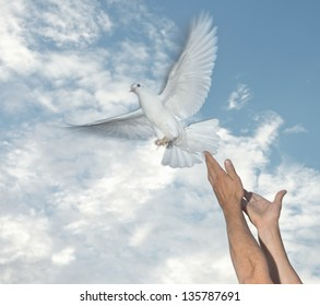 white pigeon and freedom