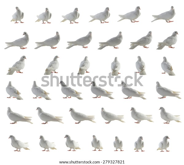 white pigeon removed around on 360 degrees in 36 positions