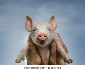 White piglet in girls hands in sky