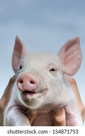White piglet in girls hands smiling