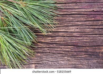 White pine tree boughs background for seasonal Christmas