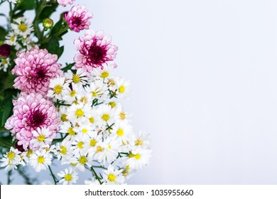 white and pink aster flowers close up