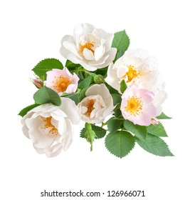 White and pink dog rose flowers with leaves and bud, isolated on white background