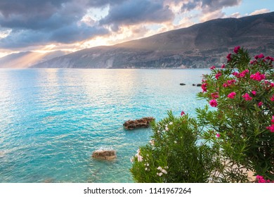 White and pink flowers above the sea and sunbeams from the sky