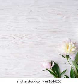 White and pink peony flowers on  wooden background