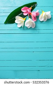 White and pink tropical plumeria flowers on turquoise wooden background. Selective focus. Vertical image. Place for text.