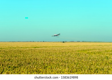 white plane fumigating rice fields with blue sky