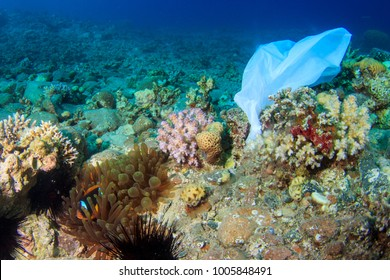 White plastic bag caught on the coral reef next to an anemone with fish