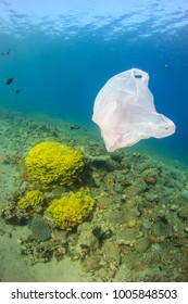 White plastic bag underwater on the coral reef