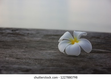 the white plumeria on brown wood sea sky background with soft light in morning