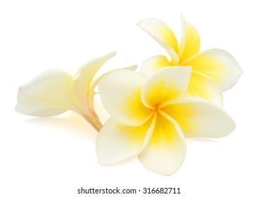 Plumeria flower lei images stock photos vectors shutterstock white plumeria rubra flower isolated on white background mightylinksfo