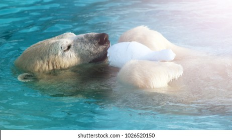 White Polar Bear Hunter on the Ice in water drops, wildlife