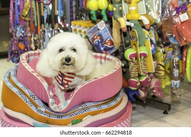 White poodle sitting in pet store