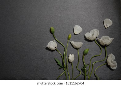 white poppies on gray background