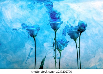 White poses inside in water on a white background. Flowers is under the water with acrylic blue paints.