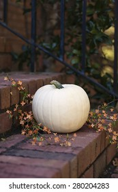 White pumpkin with orange flowers on brick steps