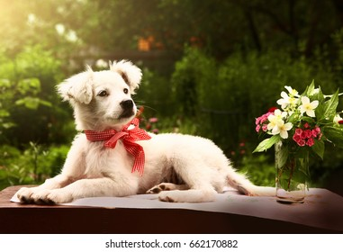 white puppy photo in summer garden with vase and flowers