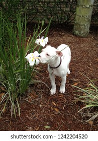 white puppy stopping to smell the flowers