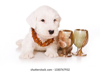 White puppy terrier and beads (isolated on white)