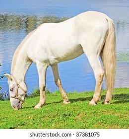 White Pure Animal Grace