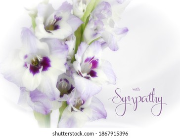 White and purple gladiola flower isolated on white background with soft focus. Sympathy greeting card. Condolence card