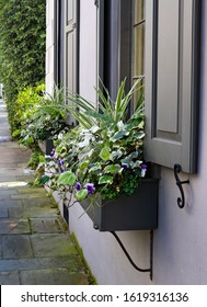 White, purple and green spill out of window boxes under elegant shutters on an old home along a moss covered flagstone sidewalk.