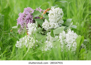 white and purple lilac flowers in basket on grass, outdoor photo